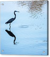 Tricolored Heron Silhouette Acrylic Print
