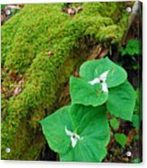 Trillium Pair By Mossy Log Acrylic Print