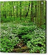Trillium Woods Vi Acrylic Print