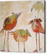 Trio Birds Acrylic Print