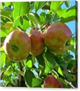 Trio Of Apples Acrylic Print