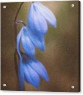 Trio Of Spring Flowers Acrylic Print