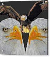 Triple Eagle Acrylic Print