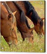 Triple Mustang Treat Acrylic Print