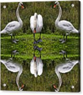 Triplets In Reflection Acrylic Print