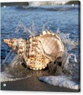 Triton Shell  Acrylic Print