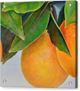 Trois Oranges Acrylic Print