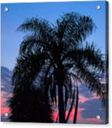 Tropic Sunset In Floirida Acrylic Print