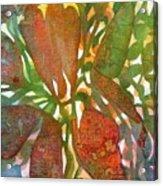 Tropical #2 Acrylic Print