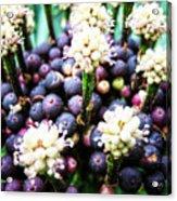 Tropical Berries 3 Acrylic Print