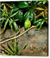 Tropical Bird 3 Acrylic Print