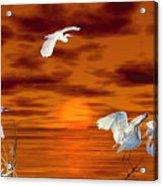 Tropical Birds And Sunset Acrylic Print
