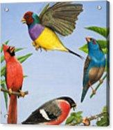 Tropical Birds Acrylic Print
