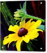 Tropical Canna Susan Acrylic Print