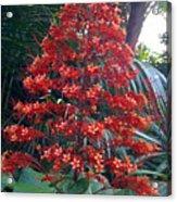 Tropical Christmas Acrylic Print