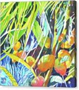 Tropical Design 1 Acrylic Print