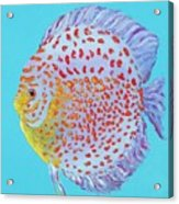 Tropical Discus Fish With Red Spots Acrylic Print
