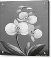 Tropical Elegance In Black And White Acrylic Print