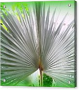 Tropical Fan Acrylic Print