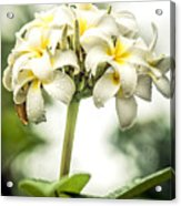 Tropical Flower 7 Acrylic Print