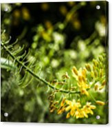 Tropical Flowers 7 Acrylic Print