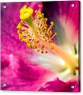 Tropical Flowers 8 Acrylic Print