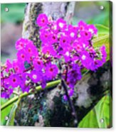 Tropical Flowers Of Costa Rica Acrylic Print