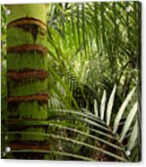 Tropical Forest Jungle Acrylic Print