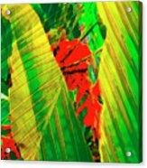 Tropical Fusion Acrylic Print