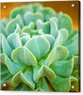 Tropical Garden 12 Acrylic Print