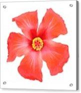 Tropical Hibiscus Flower Vector Acrylic Print