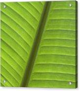Tropical Leaf Detail Acrylic Print