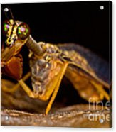 Tropical Mantispid Acrylic Print