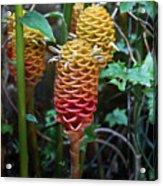 Tropical Mystery Plant Acrylic Print