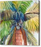 Tropical Palm Inn Acrylic Print