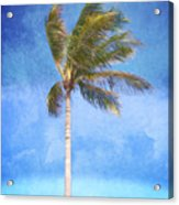 Tropical Palm Tree Acrylic Print