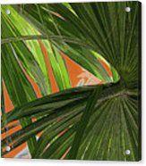 Tropical Palms 2 Acrylic Print