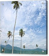 Tropical Palms Acrylic Print