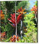 Tropical Plant In Garden Of Eden Acrylic Print