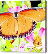 Tropical Queen Butterfly, Soldier Butterfly Acrylic Print
