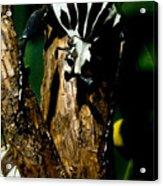 Tropical Scarab Acrylic Print