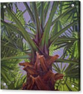 Tropical Shadows Acrylic Print