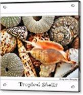 Tropical Shells... Greeting Card Acrylic Print by Kaye Menner