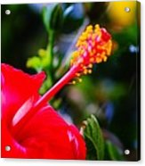 Tropical Splendor Acrylic Print