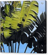 Tropical Sunlight And Shadow Acrylic Print