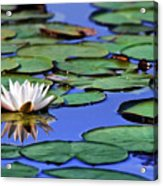 Tropical Water Lily Acrylic Print