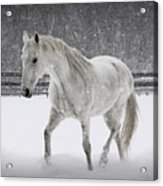 Trot In The Snow Acrylic Print