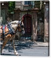 Trotting Into The Past Acrylic Print