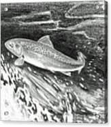 Trout II Acrylic Print