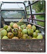 Truckload Of Coconuts Acrylic Print